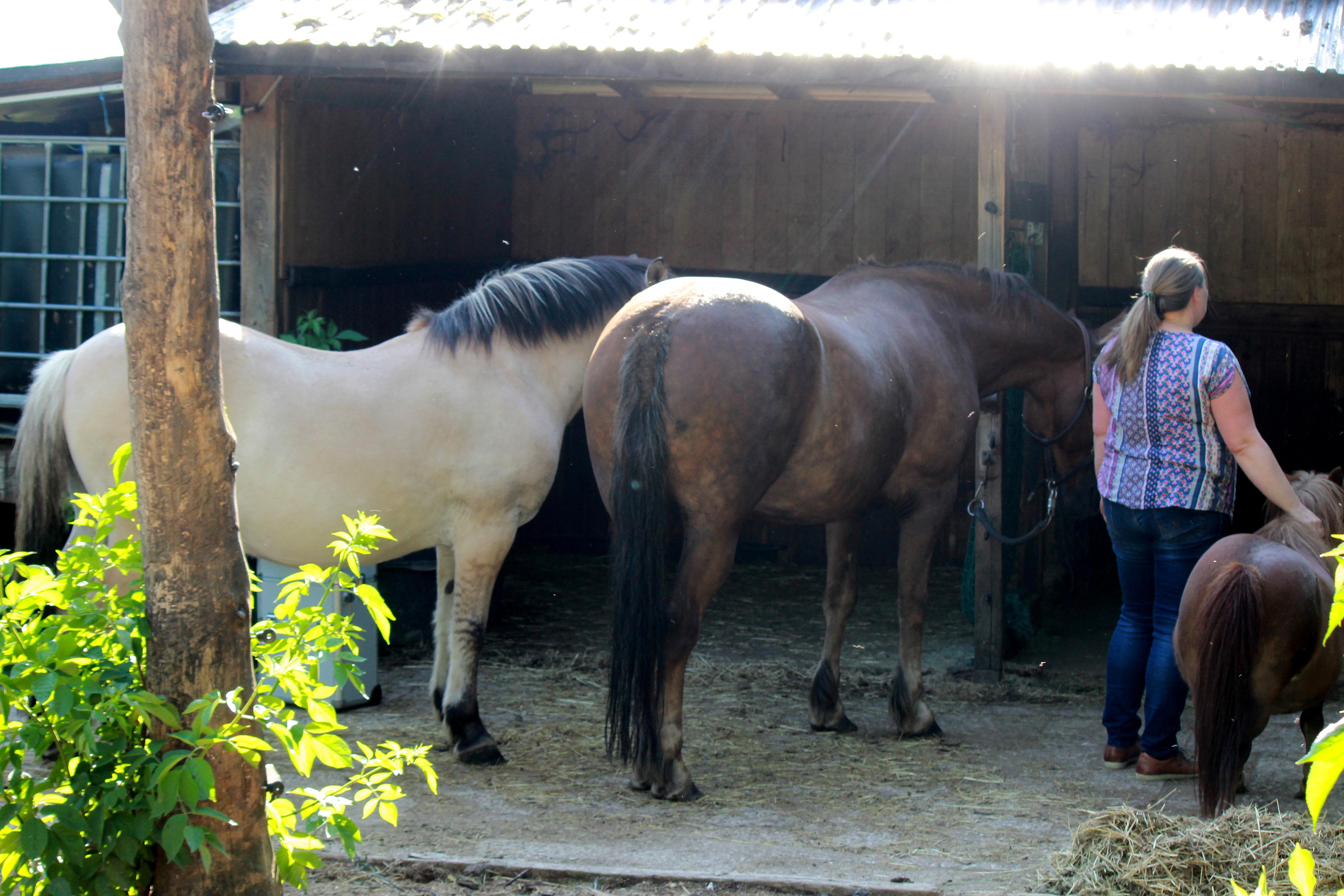 Tierheilpraxis pferd hund akupunktur phytotherapie